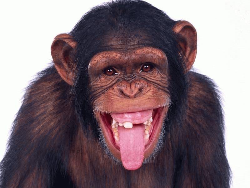 обезьяна к чему снится