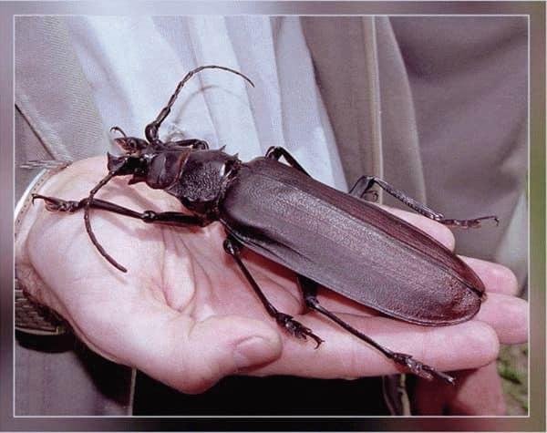 К чему снится большой жук: черный, зеленый, красивый, полосатый, на которого наступили, бросили на пол, убили