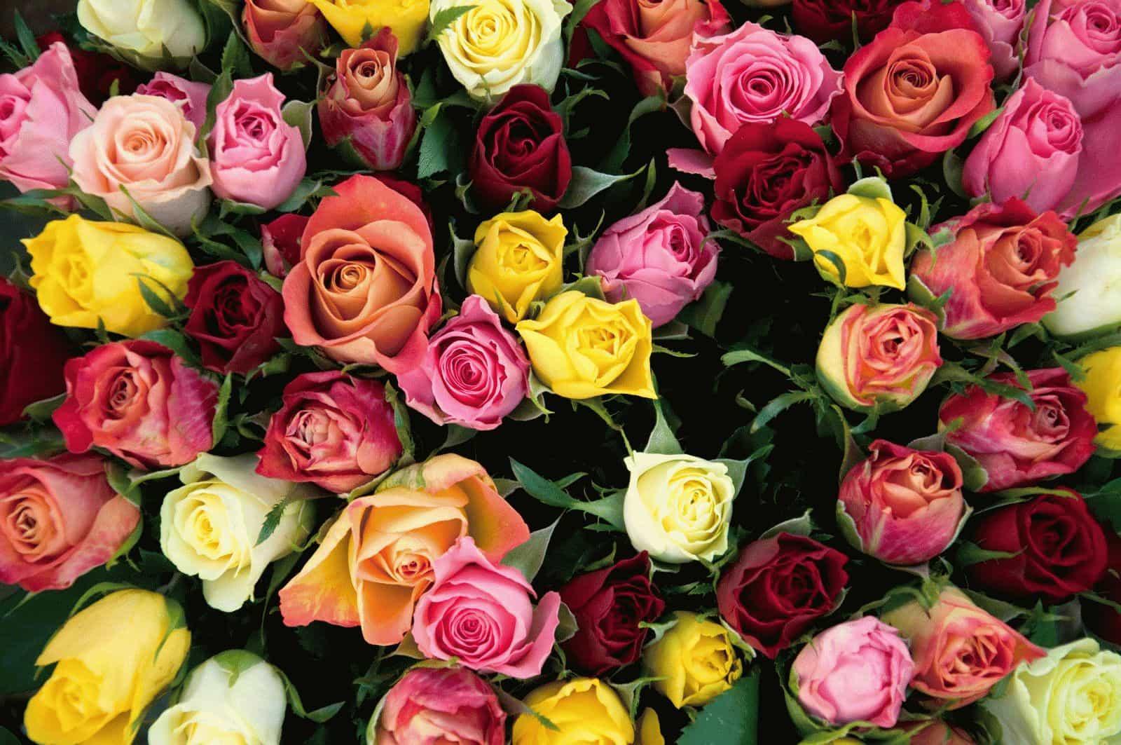Лакшми обожает цветы