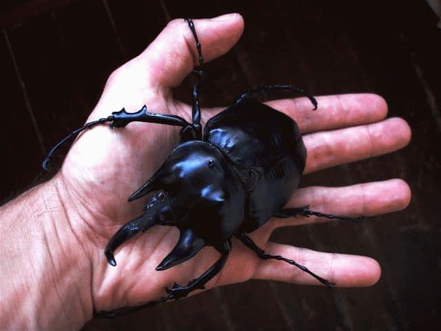 Сонник миллера жуки