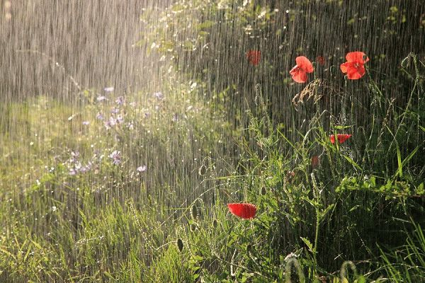 приметы к дождю по растениям