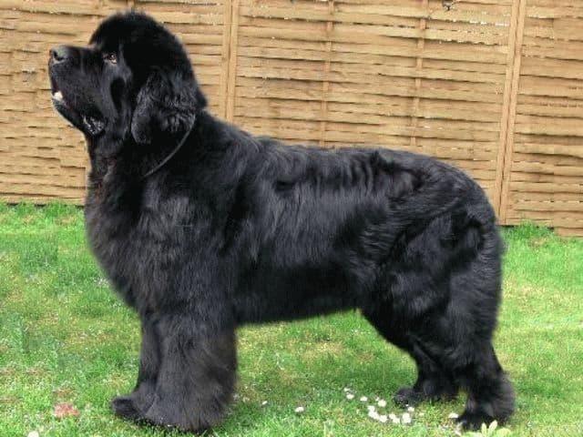 сонник собака большая добрая
