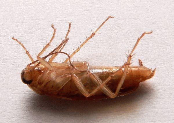 Заговор от тараканов - как избавиться от вредителей навсегда