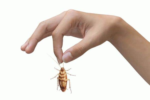 как избавиться от тараканов навсегда: заговоры