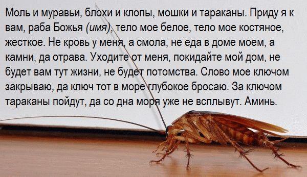 ночной заговор от тараканов