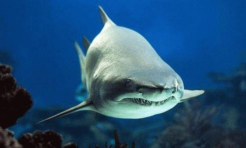 К чему снится акула в воде?