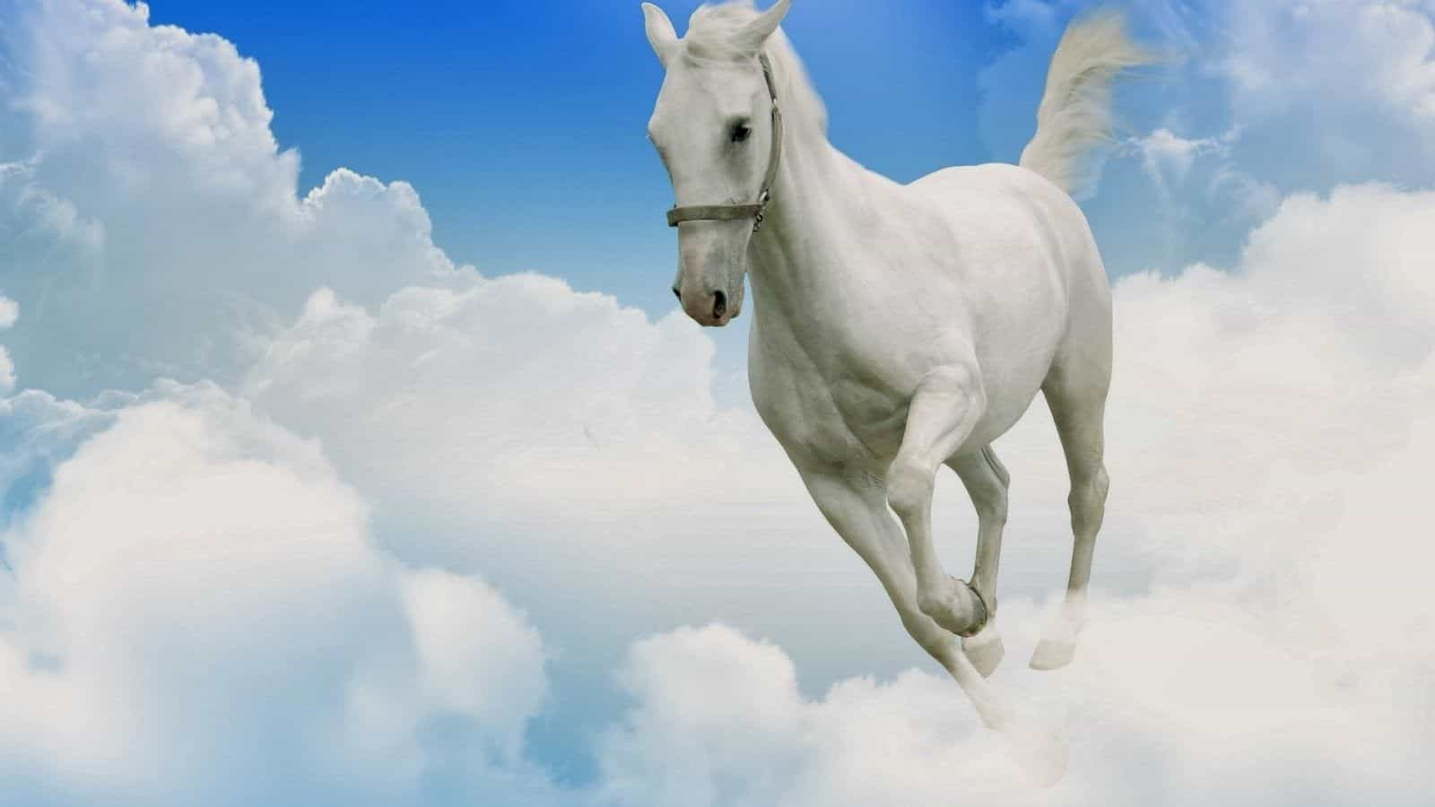 Сниться белая лошадь