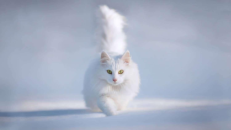Приснилась белая кошка: трактуем по сонникам