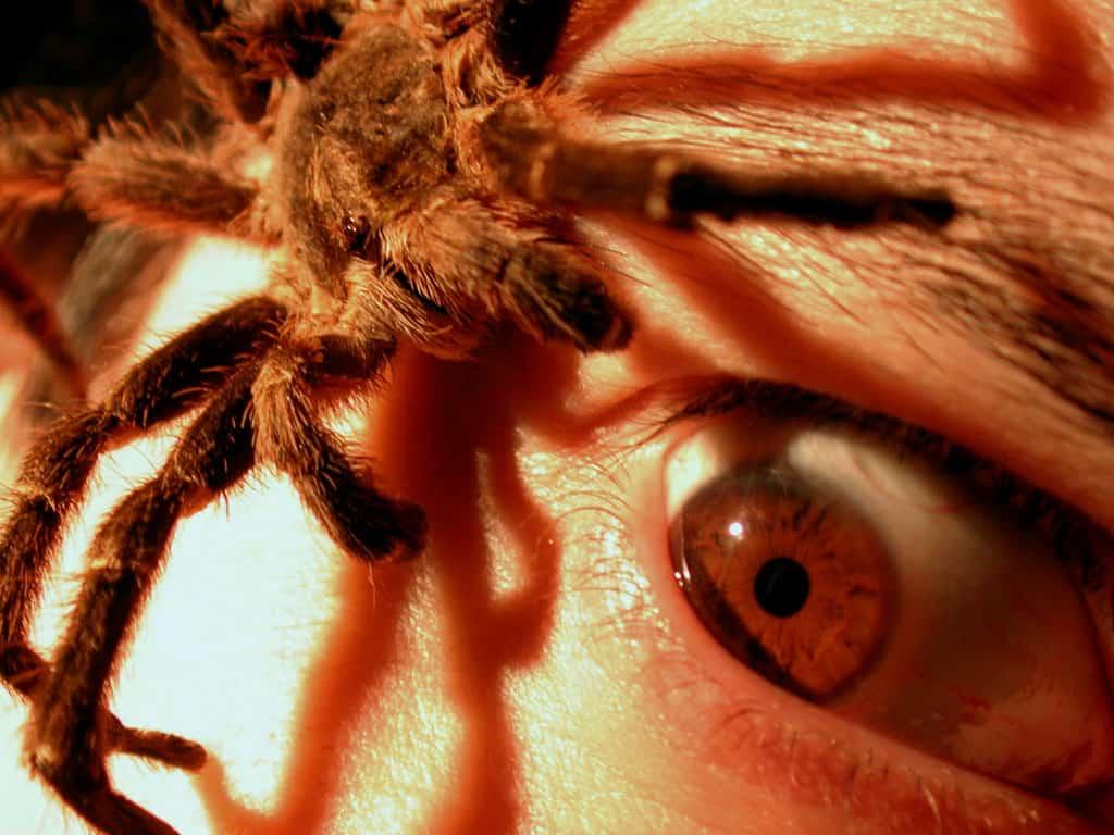 Сонник: белый паук