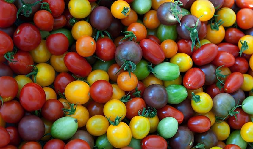 Точное толкование сна про помидоры по различным сонникам