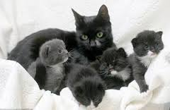 Приснилась беременная кошка: что это значит