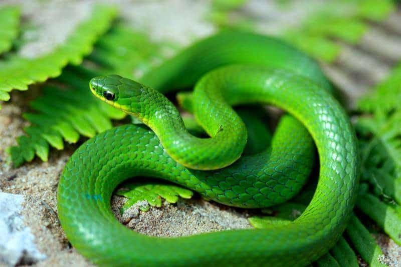 Сонник Змея, к чему снится Змея во сне видеть