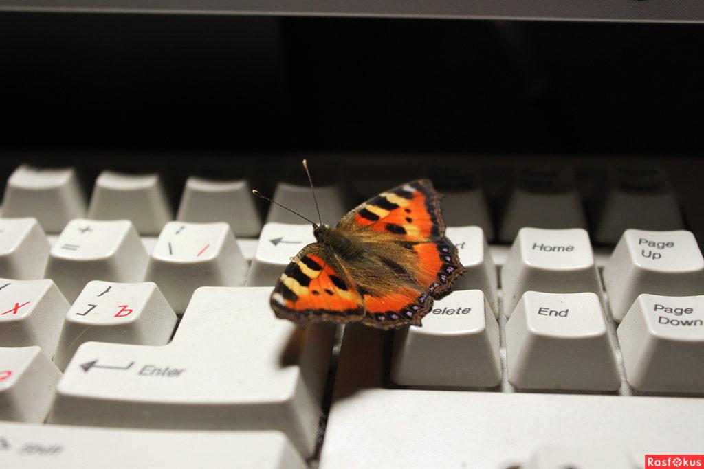 Бабочка на клавиатуре