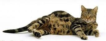 кошка во сне