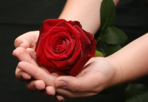 Приснились розы: толкование по разным сонникам