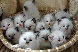 Коты в кошелке