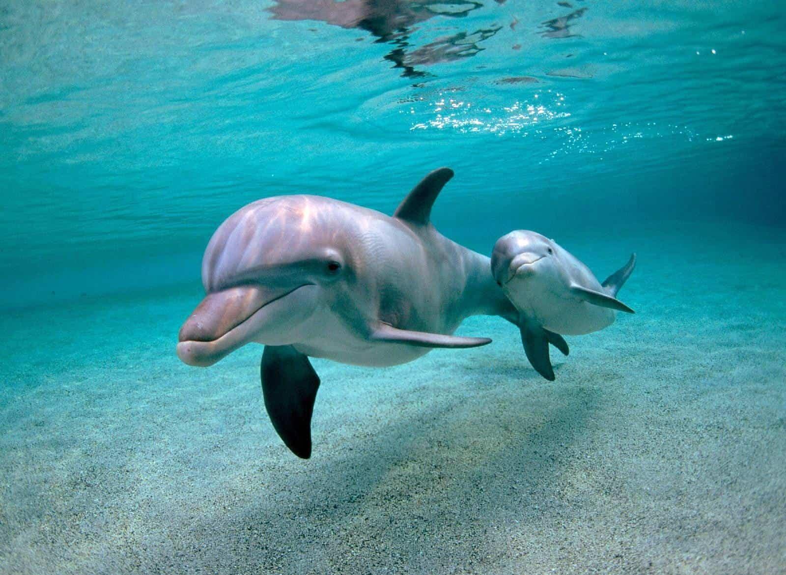 Милые дельфины