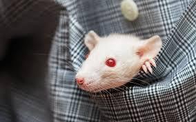 Мышка в кармане