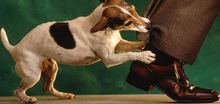 Собака грызет ногу