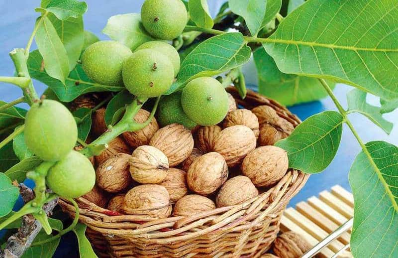 К чему снятся грецкие орехи по надежным сонникам