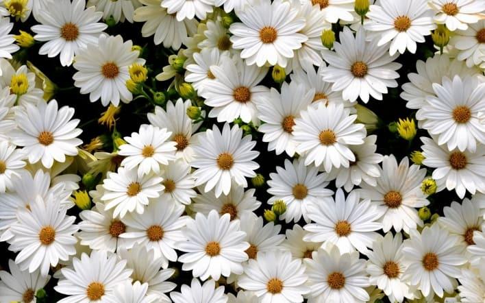 Приснились белые цветы нюансы расшифровки по сонникам