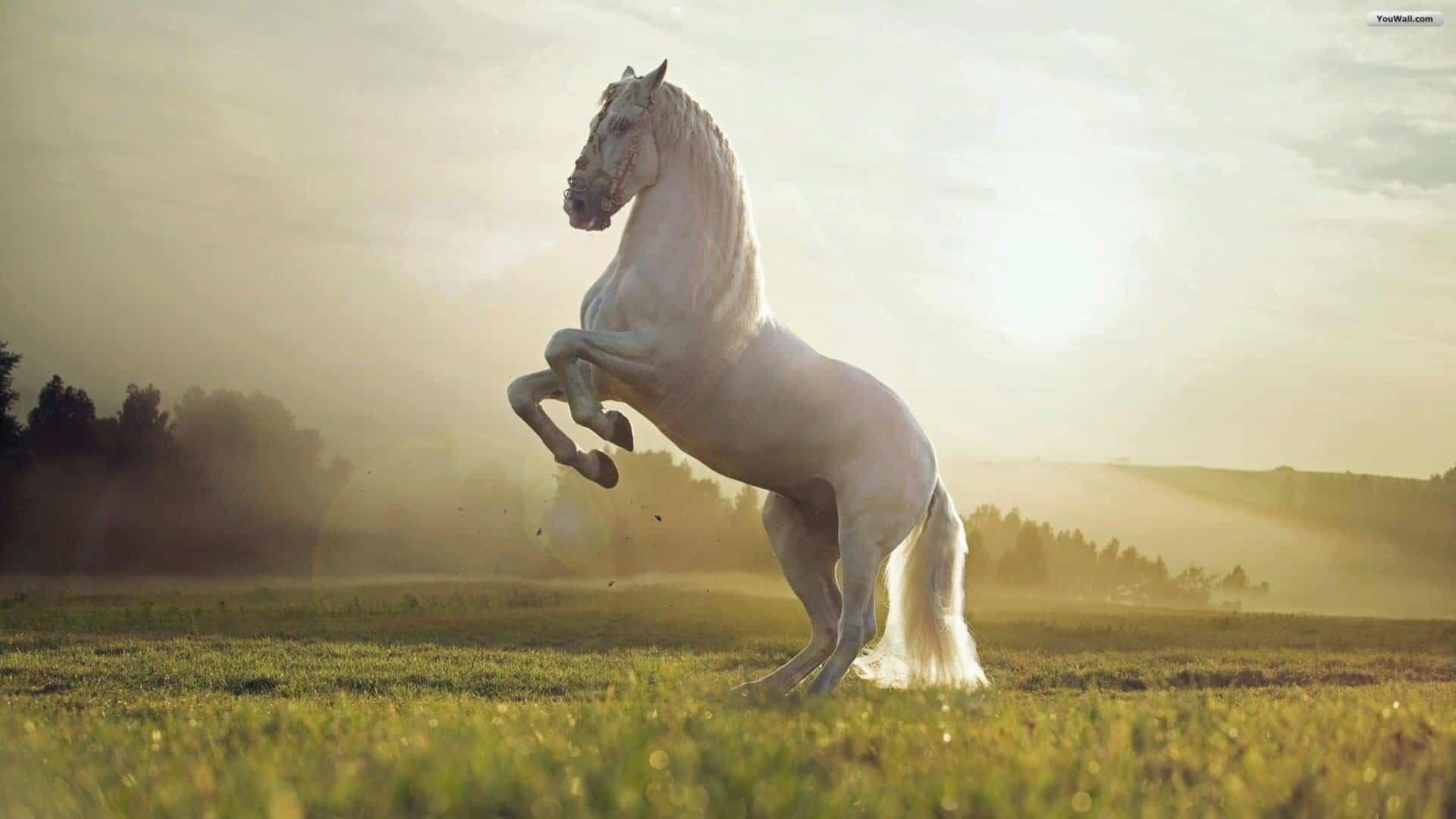 Толкование снов конь, сон конь, приснилось конь.