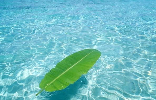 Лист на воде