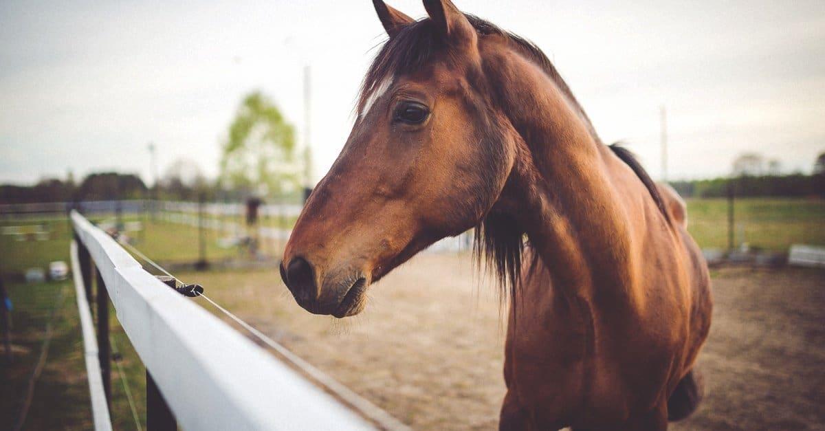 Приснилась лошадь: как правильно толковать по сонникам