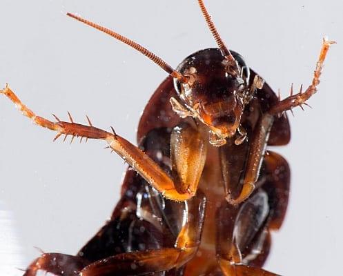Перевернутый таракан