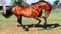 Приснилось что еду на лошаде: особенности толкования