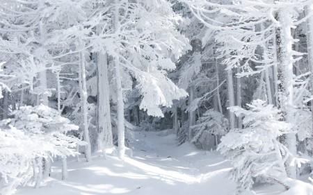 Во сне иду по снегу — как правильно расшифровать по сонникам