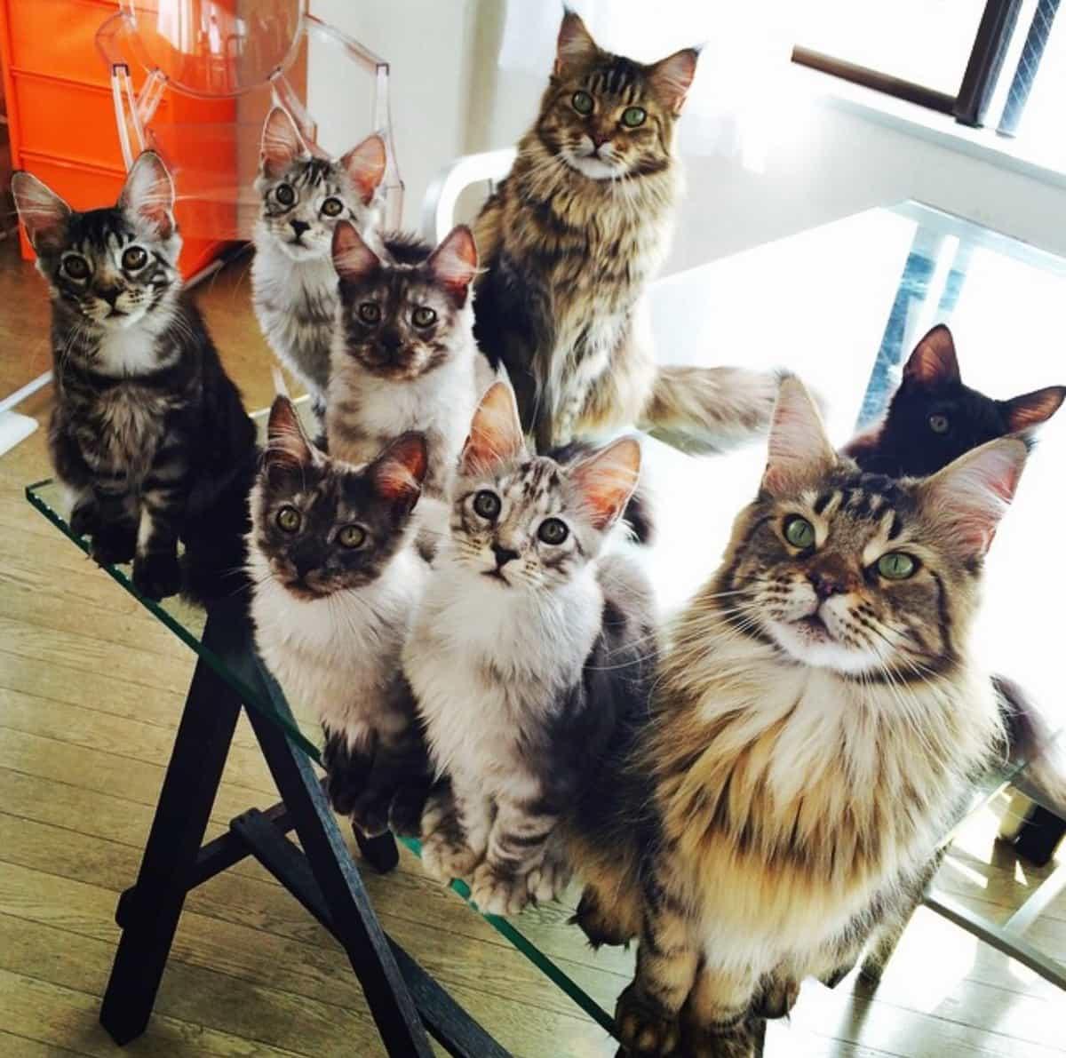 К чему снятся много кошек и как найти правильное толкование по сонникам