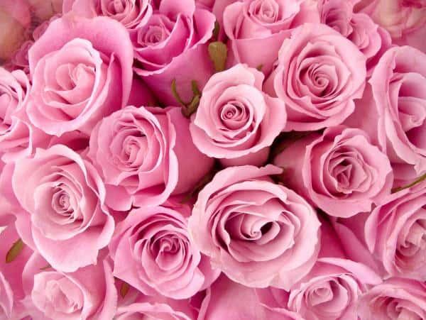 Приснились цветы: нюансы толкования по сонникам