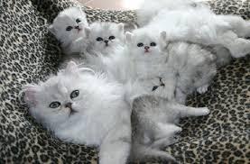 Приснилась кошка с котятами — нюансы расшифровки по сонникам