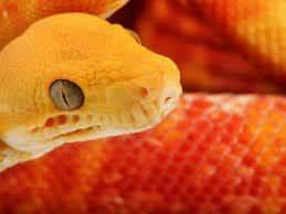 Голова змея