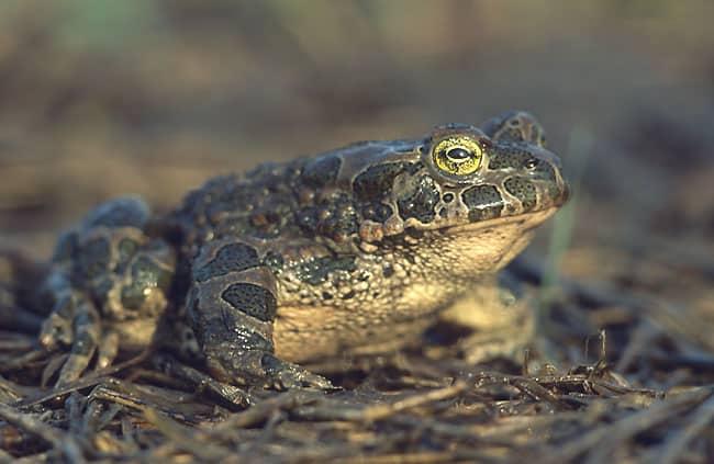 К чему снится жаба по сонникам Миллера, Фрейда, Лонго