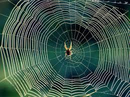 Приснилась паутина — как правильно расшифровывать по сонникам