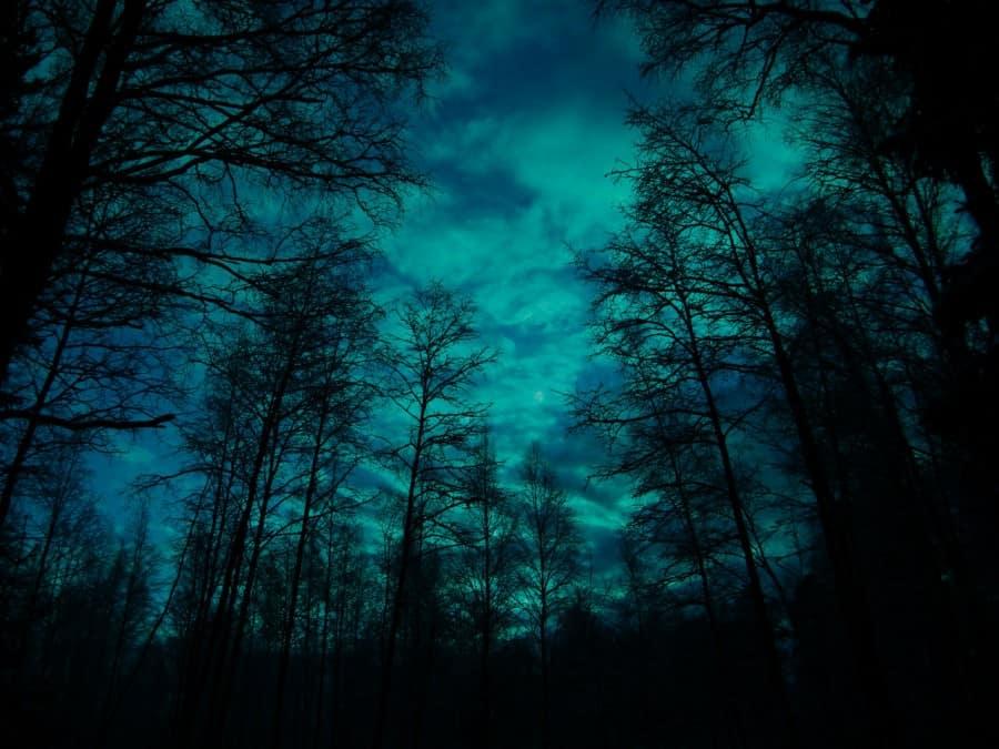 Лес во тьме