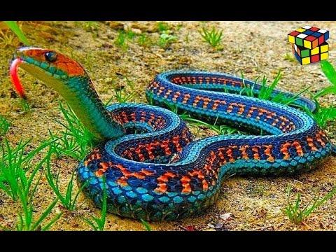 Яркая змея