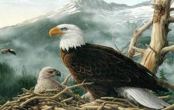 Орел наблюдает