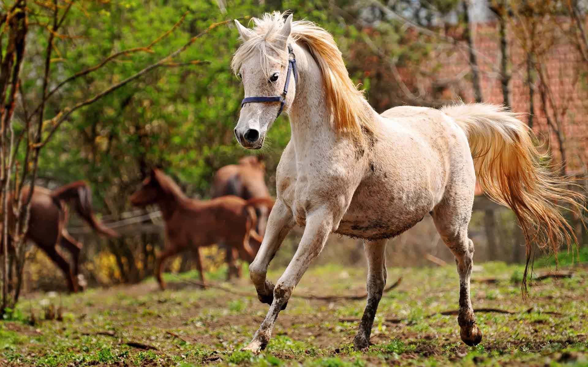 Светлая лошадь