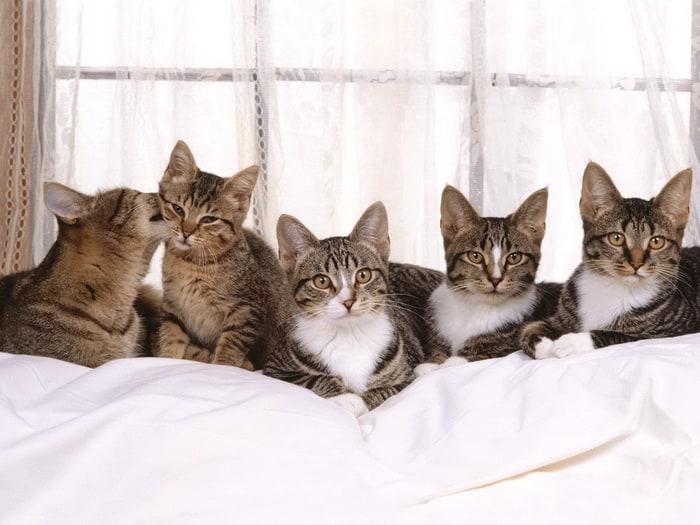 Отдых кошек