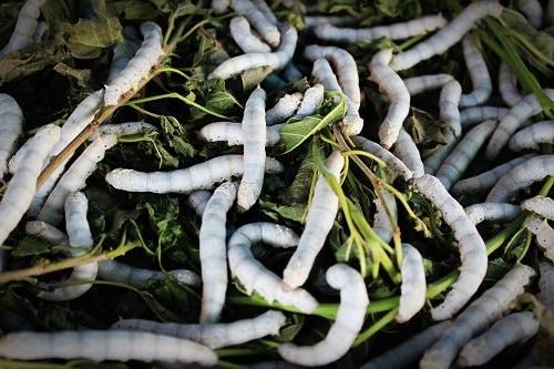 Приснились белые черви — расшифровка по разным сонникам