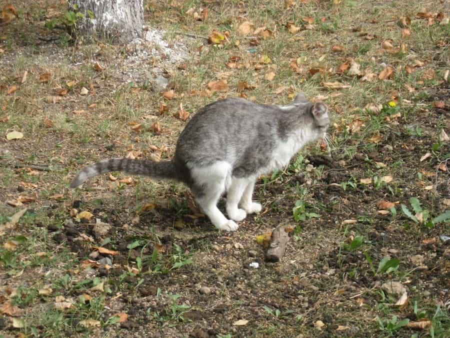 К чему снится кошачье говно по сонникам Миллера, Лоффа, Феломена