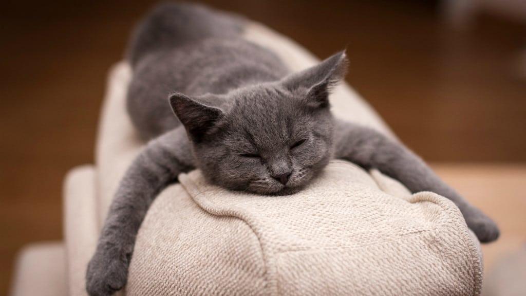 К чему снится кошка с котятами: сонник Миллера и Ванги