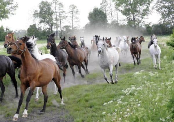 Приснилась лошадь женщине: нюансы расшифровки по сонникам