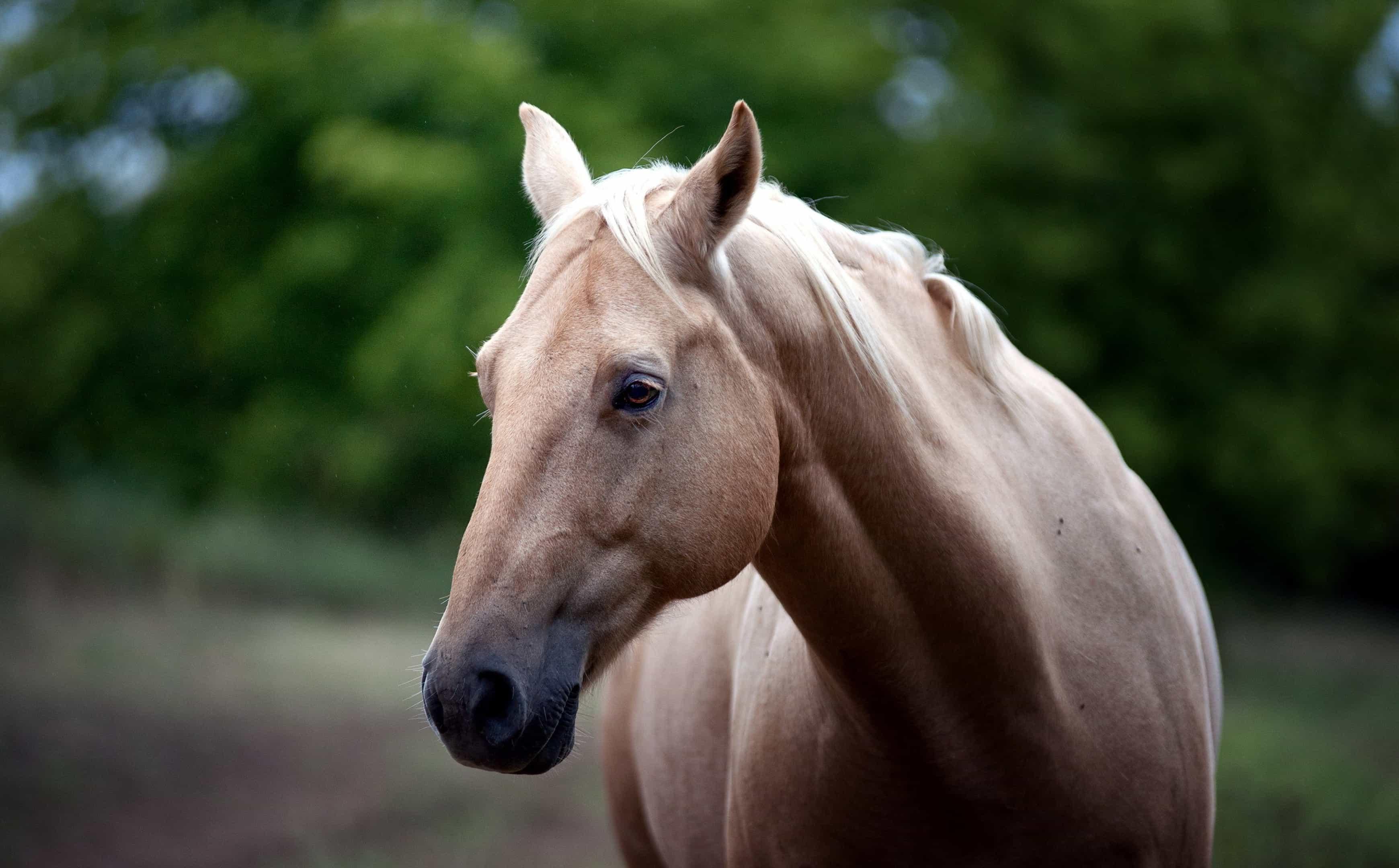 Бежевая лошадь