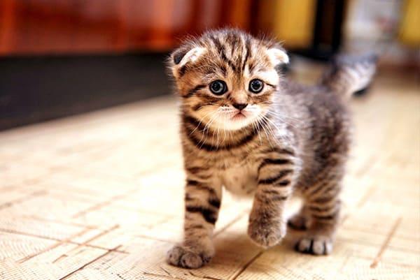 Почему в ваш сон пожаловал милый пушистик — котенок