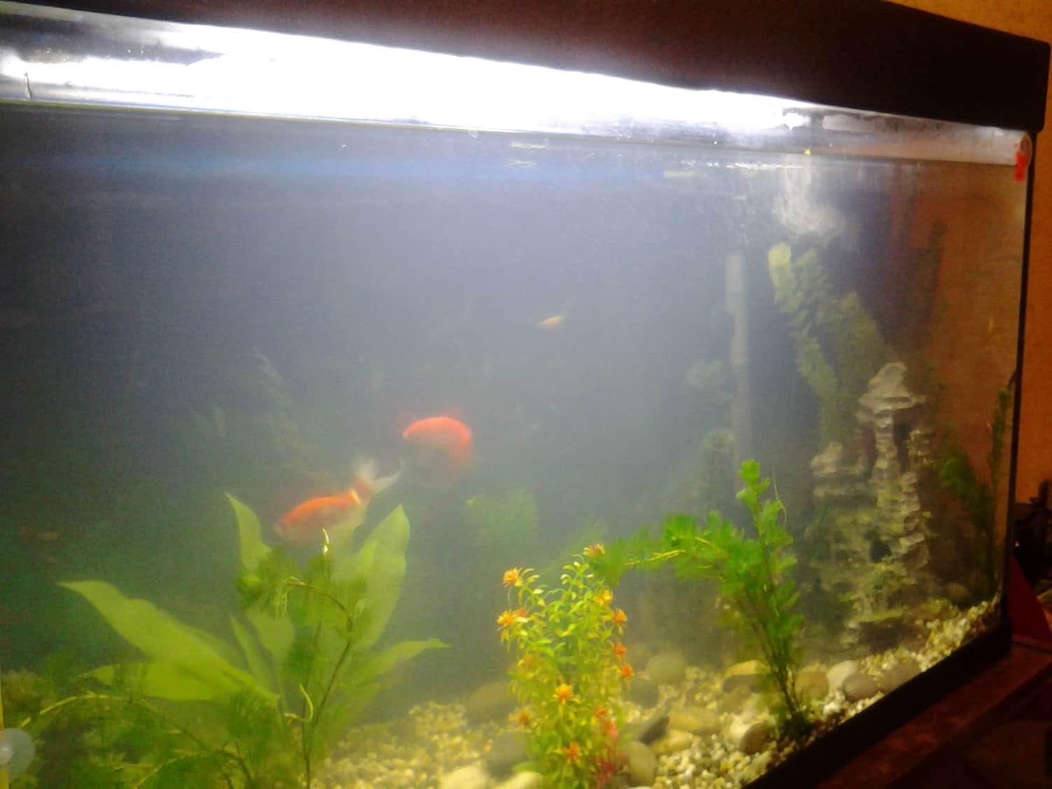 Мутный аквариум