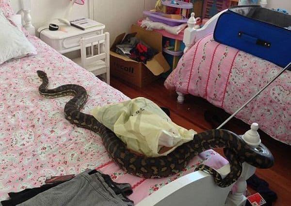 Змея на кровати